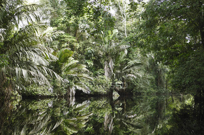 Palm trees and jungle plants reflecting in Palm Canal, Tortuguero National Park, Limon Province, Costa Rica — стокове фото