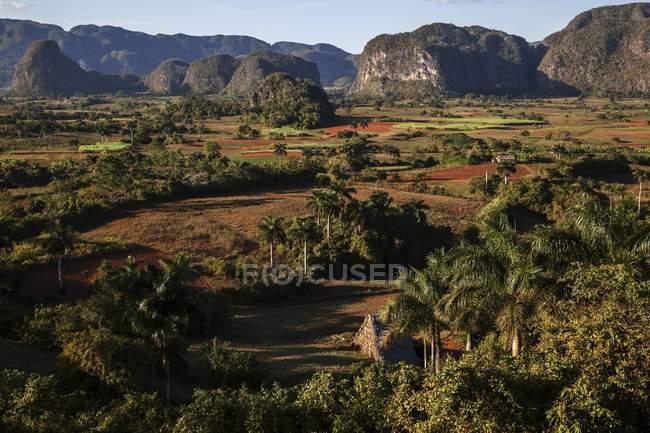 Champ de tabac avec paysage de montagnes karstiques dans la vallée de Vinales, Pinar del Rio Province, Cuba, l'Amérique centrale — Photo de stock