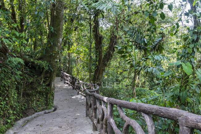 Hiking trail in rainforest, Mistico Arenal Park, Alajuela province, Costa Rica, Central America — стокове фото