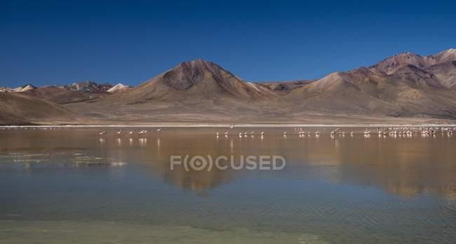 Salt Lake Salar de Surire mit Flamingos in Putre, Region de Arica y Parinacota, Chile, Südamerika — Stockfoto