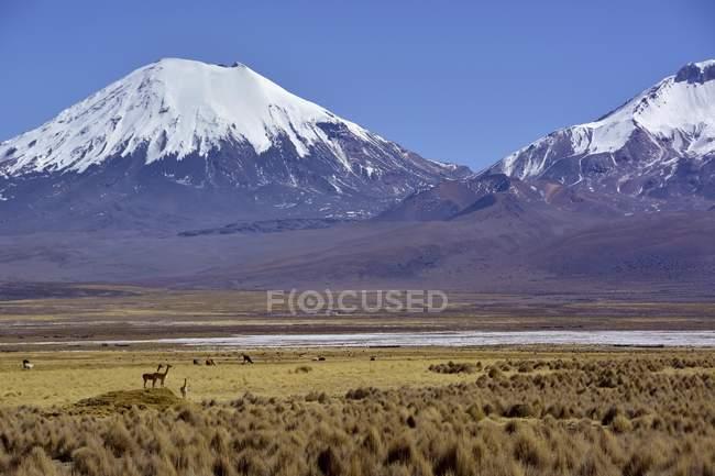Засніжених вулканів Померапе і Парінакота в Національний парк Сахама Невадо на кордоні Болівії і Чилі — стокове фото