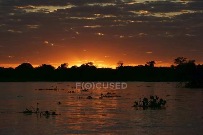 Tramonto nel fiume paesaggio, Pantanal, Mato Grosso do Sul, Brasile, Sud America — Foto stock