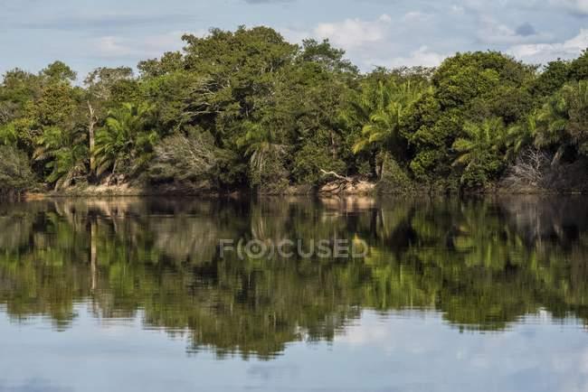 River landscape with dense vegetation at Rio Negro, Pantanal, Mato Grosso do Sul, Brazil, South America — стокове фото