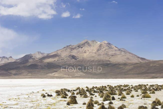 Nature reserve in Putre of Salar de Surire salt lake, Region Arica y Parinacota, Chile, South America — стокове фото