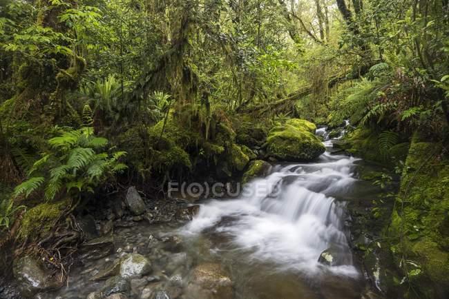 Поток с папоротники в густой тропический лес, национального парка Фьордленд, Southland, Новая Зеландия, Океания — стоковое фото