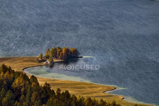 Ver Alerces otoño con lago Silser, Sils, alta Engadina, Suiza, Europa - foto de stock
