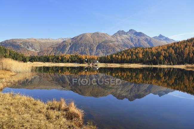 Autumnal larch forest reflection in water of mountain Lake Stazersee, Saint Moritz, Graubunden, Switzerland, Europe — Stock Photo