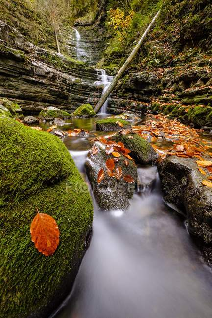 Mountain stream Taugl with rocks covered with autumn leaves, Tauglbach Gorge, Tauglbachklamm, Tennengau, Salzburger Land, Austria, Europe — Stock Photo