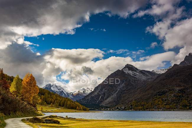 Ver Alerces otoñales con lago Silser frente Nevado Valle de la Engadina cima de la montaña, Sils, alta Engadina, Suiza, Europa - foto de stock