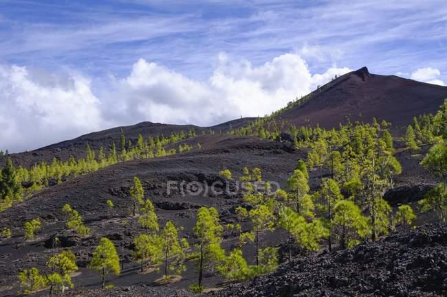 Paisagem de lava Negra Montana com plantas verdes, El Tanque, Tenerife, Ilhas Canárias, Espanha, Europa — Fotografia de Stock