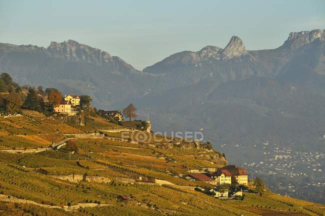 Vigneti in fogliame autunnale, Lavaux, Cantone di Vaud, in Svizzera, Europa — Foto stock