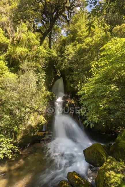 Waiatiu Falls waterfall in rainforest, Whirinaki Forest, North Island, New Zealand, Oceania — Fotografia de Stock