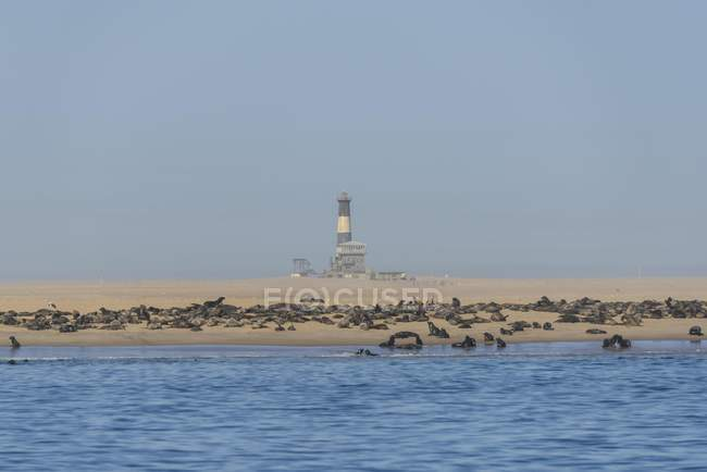 South African seals colony on beach with lighthouse and lodge, Pelican Point, Walvis Bay, Erongo region, Namibia, Africa — Stock Photo