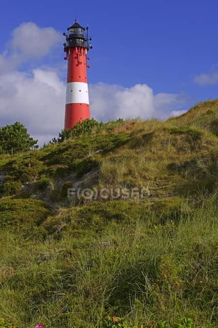 Hornum Lighthouse in green vegetation, Sylt, North Frisian Islands, North Frisia, Schleswig-Holstein, Germany, Europe — стоковое фото