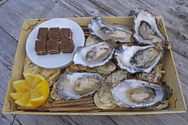 Frische Austern in traditionellen Punnet, Sylt, Nordfriesischen Inseln, Nordfriesland, Schleswig-Holstein, Deutschland, Europa — Stockfoto