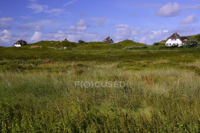 Typical Frisian thatched cottage houses in Hornum, Sylt, North Frisian Islands, North Frisia, Schleswig-Holstein, Germany, Europe — Stock Photo