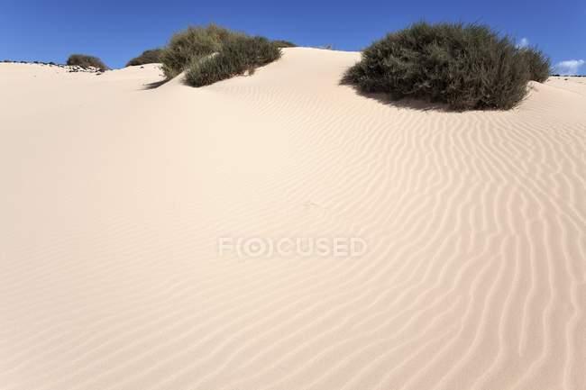 Пісок блукаючих дюн Ель Jable, Лас-Dunas де Корралехо, Корралехо природний парк, Фуертевентура, Канарські острови, Іспанія, Європа — стокове фото