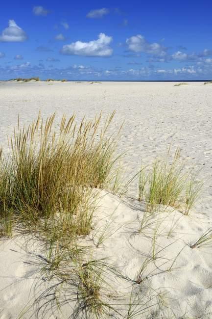 Піщаний пляж з Європейською плацдармою, Еллбоген, список, Sylt, північно-Фризька острови, Північна Frisia, Шлезвіг-Гольштейн, Німеччина, Європа — стокове фото