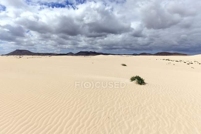 Dunes de sable, dunes errantes El Jable, Las Dunas de Corralejo, parc naturel de Corralejo, formation spectaculaire de nuages, Fuerteventura, Iles Canaries, Espagne, Europe — Photo de stock