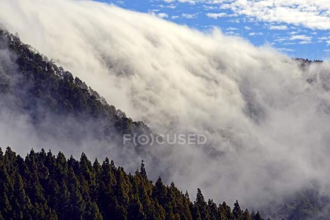 Windwolken, die über Wäldern des Teide Nationalparks, Teneriffa, Kanarischen Inseln, Spanien, Europa hängen — Stockfoto