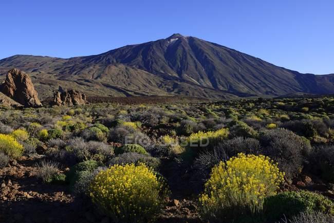 Roques de Garcia with Mount Teide, Las Canadas at sunrise, Teide National Park, UNESCO World Heritage Site, Tenerife, Spain, Europe — Stock Photo