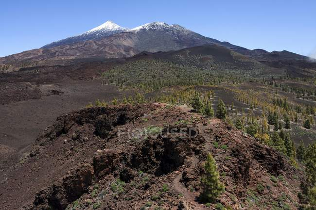 Volcanic landscape with Canary pines and snow-capped Pico del Teide and Pico Viejo, Teide National Park, UNESCO World Heritage Site, Tenerife, Spain, Europe — Stock Photo