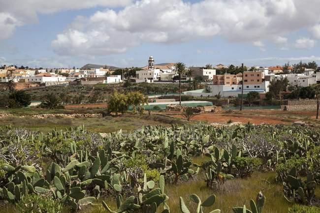 Village d'Antigua avec l'église paroissiale de Nuestra Señora de Antigua, Fuerteventura, Iles Canaries, Espagne, Europe — Photo de stock