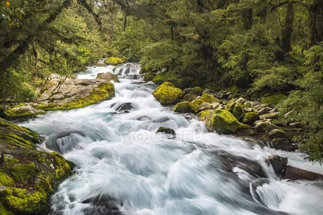 River course at Marian Falls, Fiordland National Park, Te Anau, Southland, New Zealand, Oceania — Stock Photo