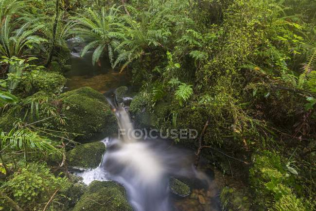 Brook with ferns in dense rainforest, Fiordland National Park, Southland, New Zealand, Oceania — стокове фото
