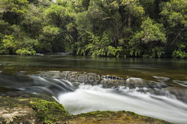 River with rainforest, Te Urewera National Park, North Island, New Zealand, Oceania — Stock Photo