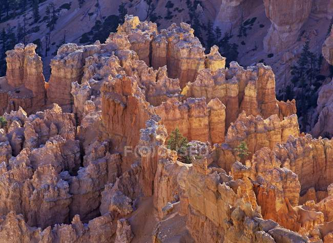 Rock formation of Bryce Canyon at sunrise, Bryce Point, Bryce Canyon National Park, Utah, USA, North America — Stock Photo