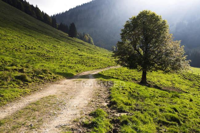 Autumn mood on road in Gross Euchst Alm, Kronberg, Alpstein, Appenzell, Switzerland, Europe — Stock Photo