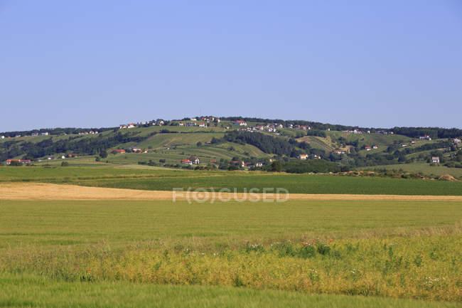 Vineyard by Eisenberg an der Pinka, Southern Burgenland, Burgenland, Austria, Europe — Stock Photo
