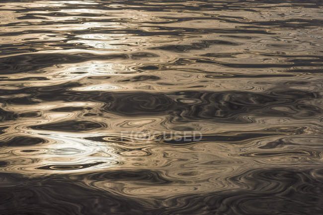 Evening sunlight reflecting on surface of sea, Denmark Strait, Greenland — Stock Photo