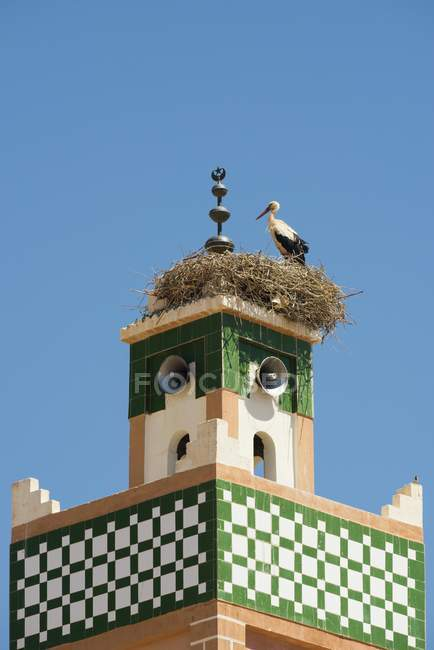 White stork on minaret nest, Ait-Ben-Haddou, World Heritage Site, Ait Benhaddou, Souss-Massa-Draa Region, Morocco, Africa — Stock Photo