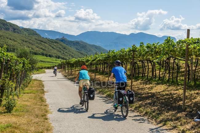 Radfahrer mit Mountainbikes unterwegs Via Claudia Augusta im Weinberg, Kalterer See, Trentino, Südtirol, Italien, Europa — Stockfoto