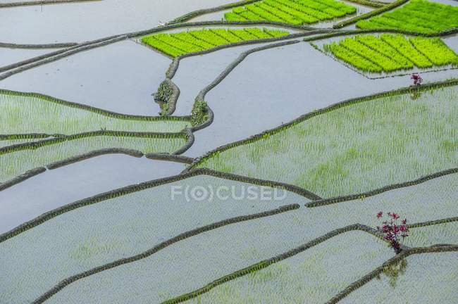 Structure of rice terraces of Banaue, Northern Luzon, Philippines, Asia — Stock Photo
