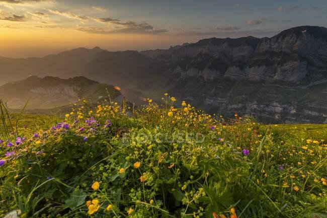 Летний луг гора с Appenzeller в фоновом режиме на восход, Аппенцелль, Швейцария, Европа — стоковое фото