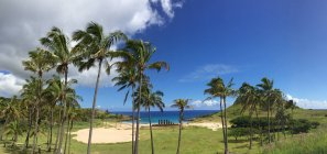 Морской берег с пальмы и пляж — стоковое фото