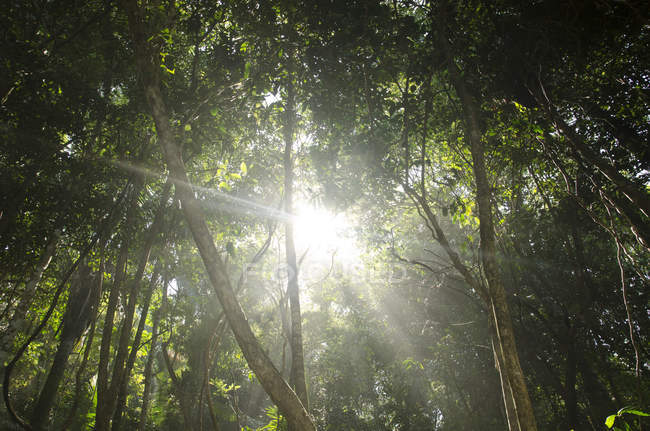 Sun shining through jungle — Stock Photo