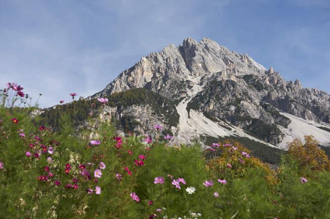 Mountain peak in the italian dolomites and wildflowers, Vodo di Cadore, Italy — Foto stock