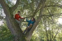 Couple climbing tree together — Stock Photo