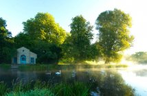 Riverside house and swans — Stock Photo