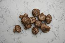 Cogumelos na superfície de mármore — Fotografia de Stock