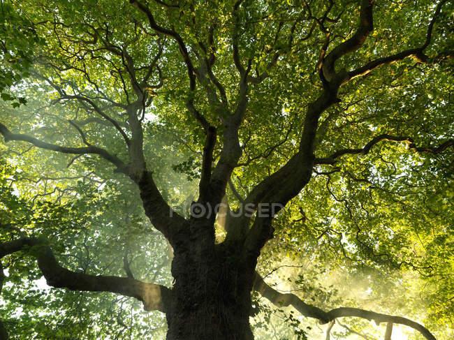 Зелене дерево з великих гілок — стокове фото