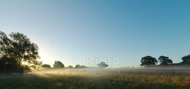 Blue sky and mist over rural field — Stock Photo