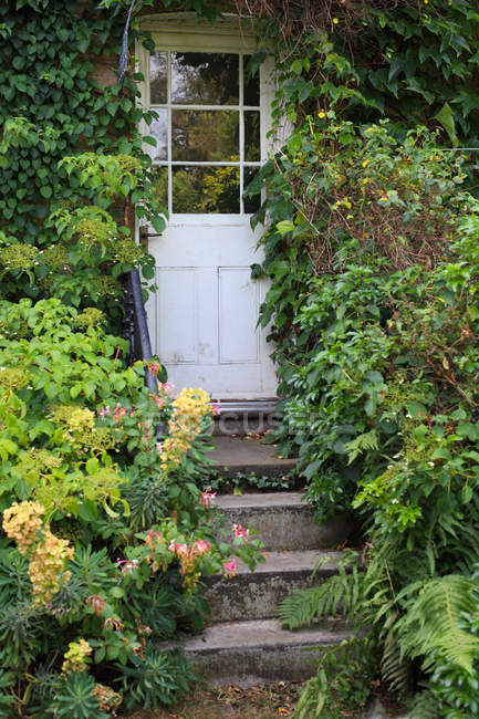 Shrubs and bushes beside steps to doorway — Stock Photo