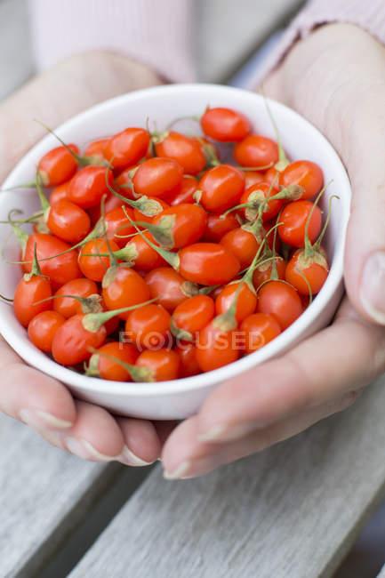 Жіночий руки, що тримає миску помідори — стокове фото