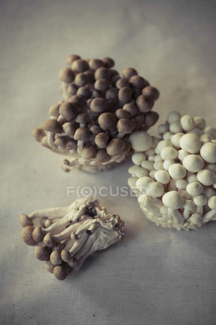 Various fungi on table — Stock Photo