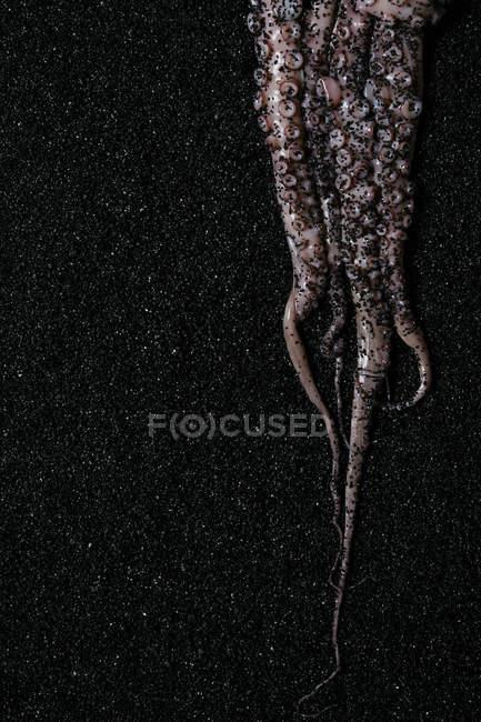 Pulpo crudo sobre negro - foto de stock